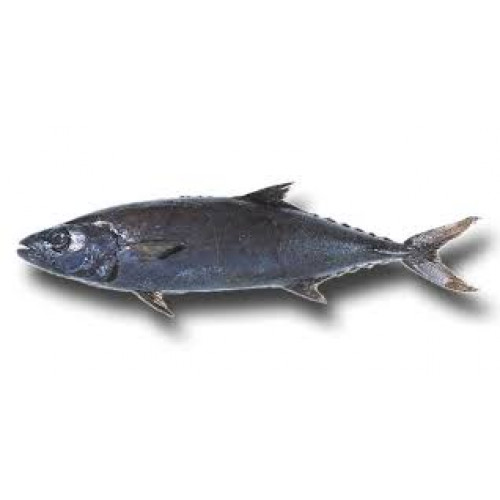 File Butterfish 2kg+