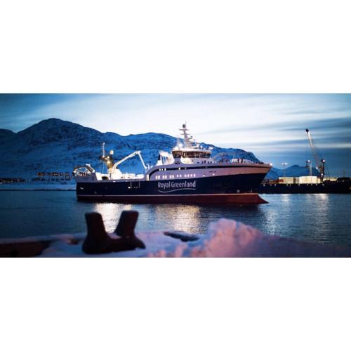 File Halibut negru salbatic Royal Greenland